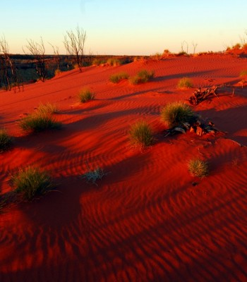 Sand dunes, Gibson Desert